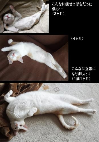 Harukiti2